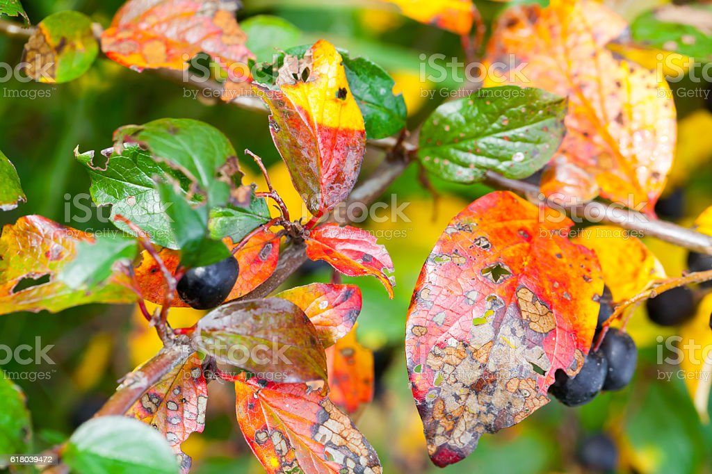 Bright colorful autumn leaves, macro stock photo