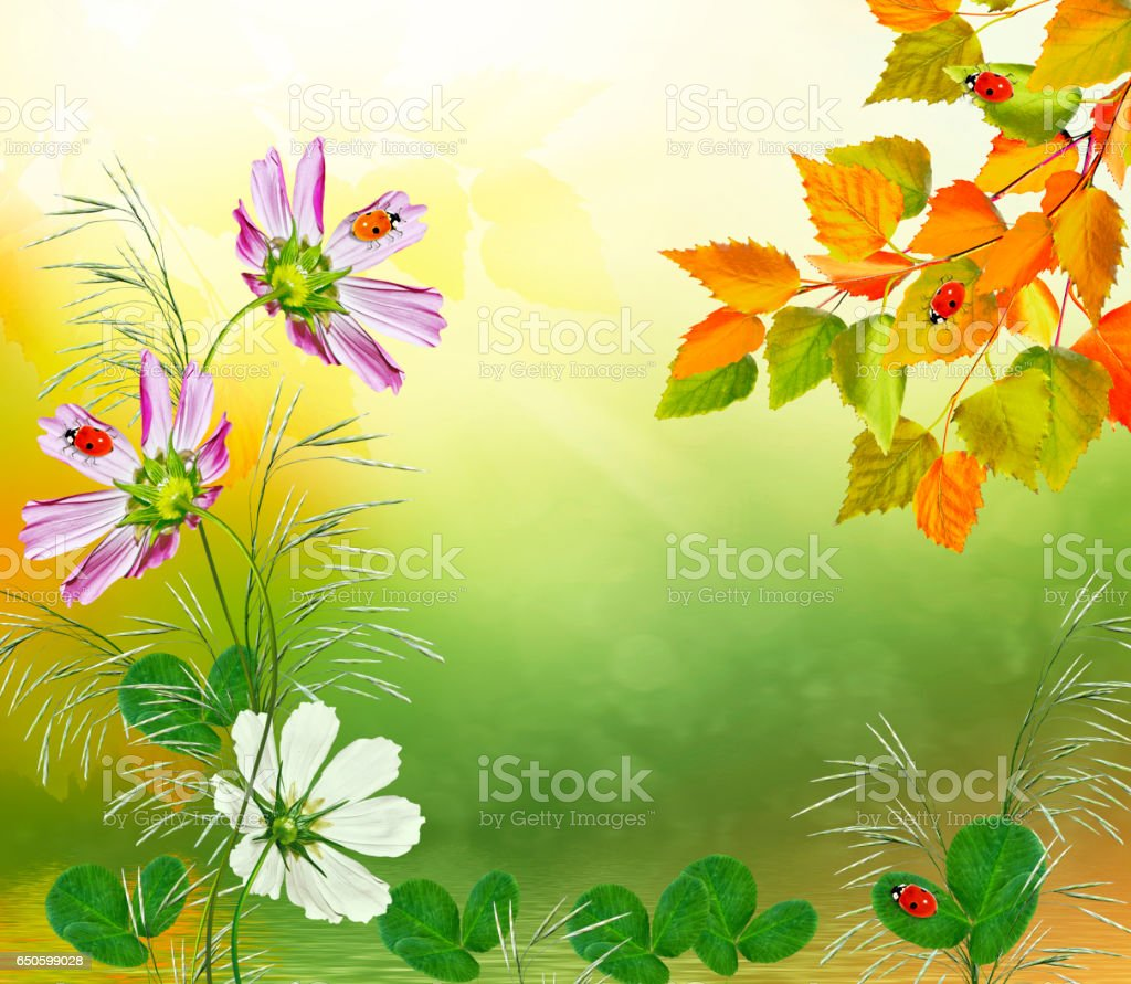 bright colorful flowers and foliage stock photo