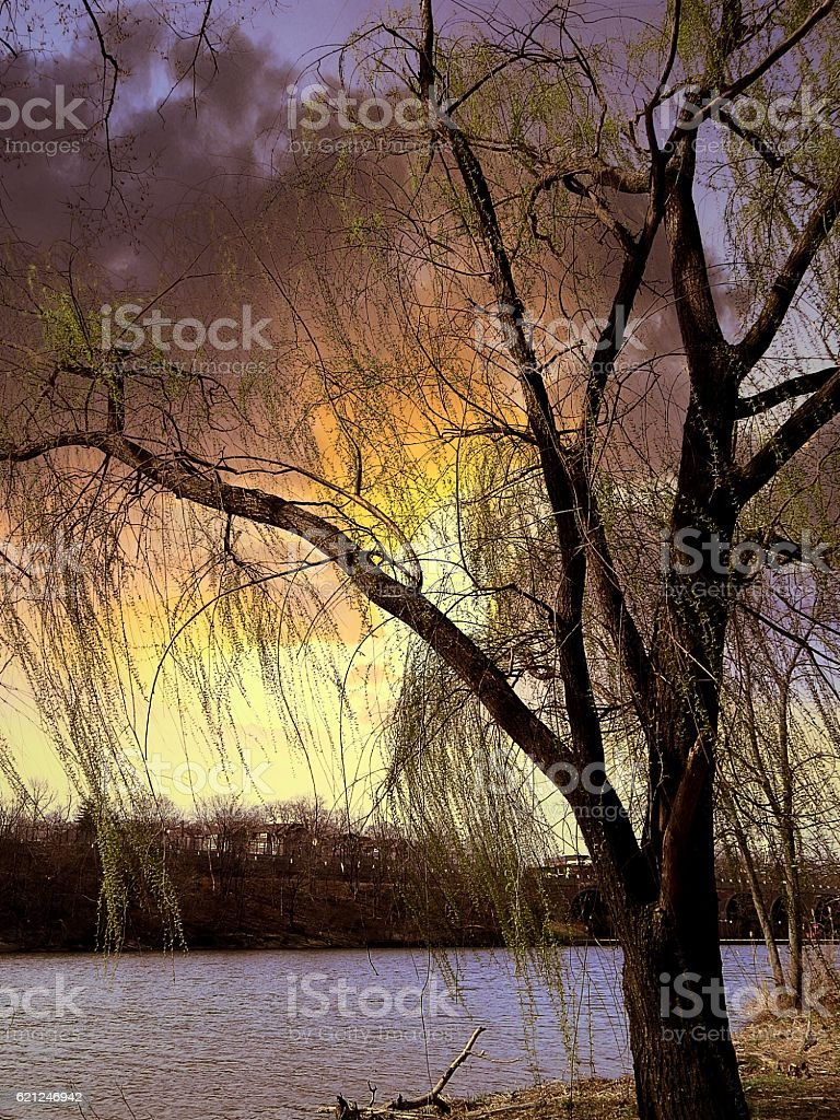 Bright Colors Through The Weeping Willow Tree stock photo