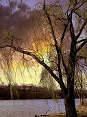 Bright Colors Through The Weeping Willow Tree