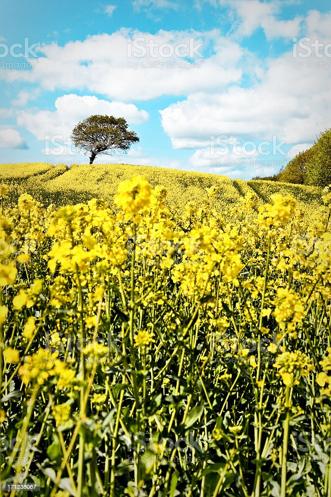 Bright Danish Landscape. stock photo