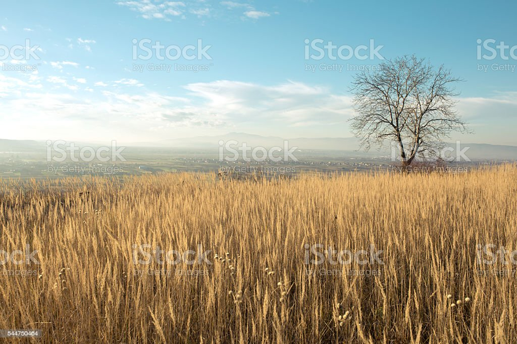 Bright day at the countryside stock photo