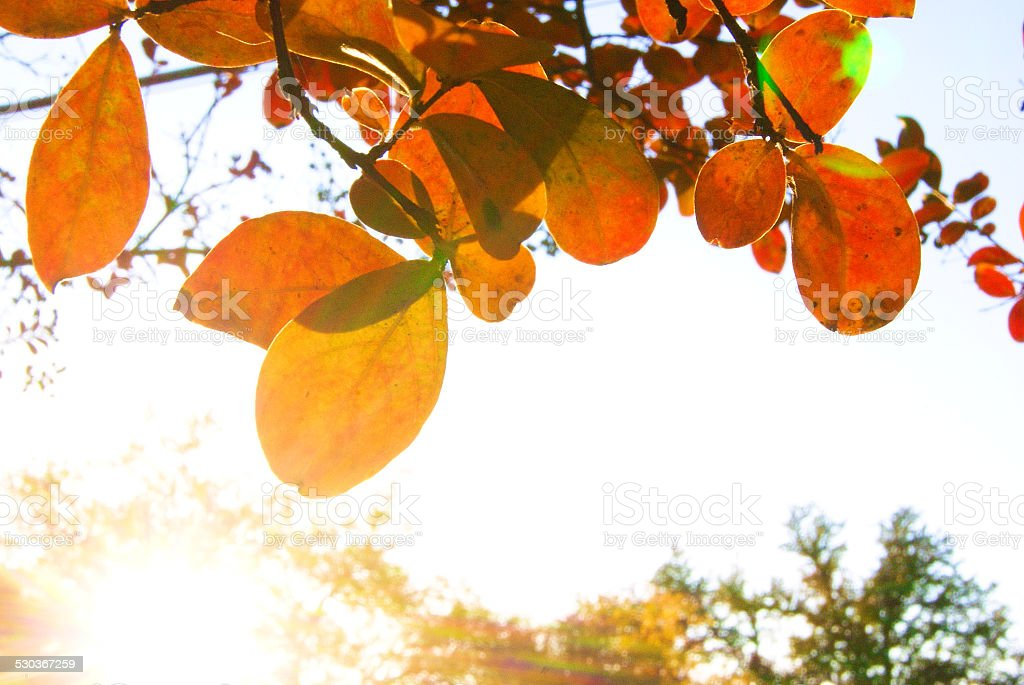 Bright Day royalty-free stock photo
