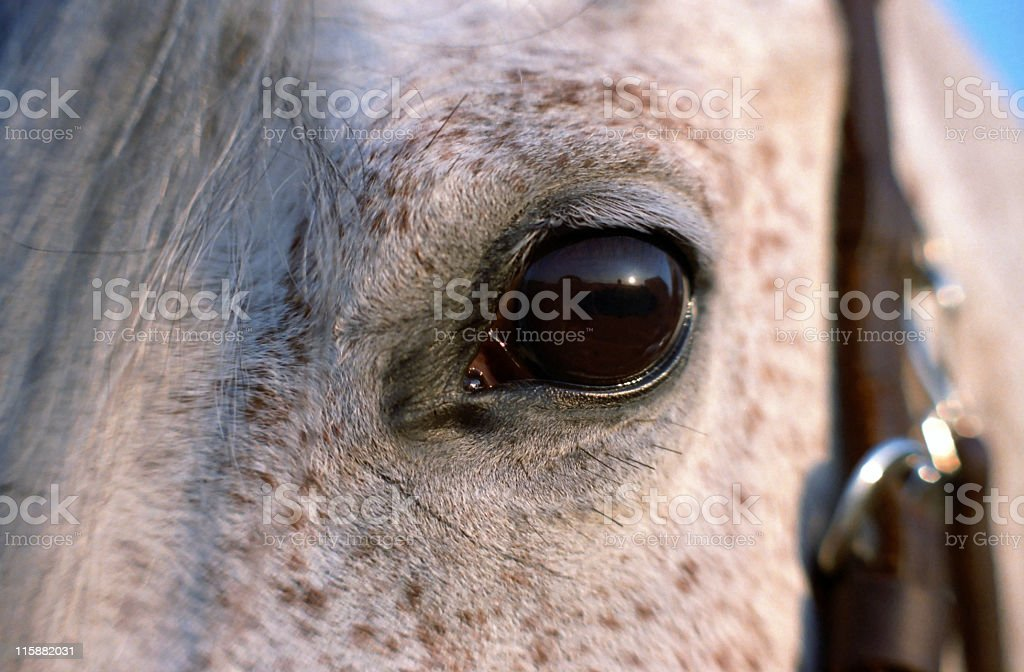 Bright Eye stock photo