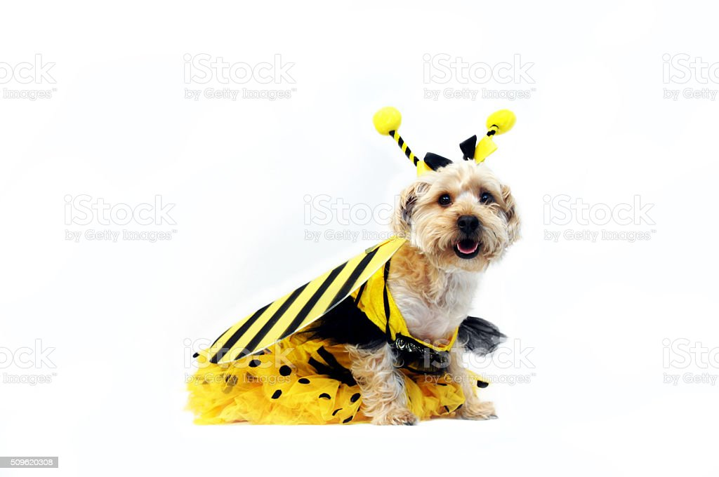 Bright Eyed Bumble Bee stock photo