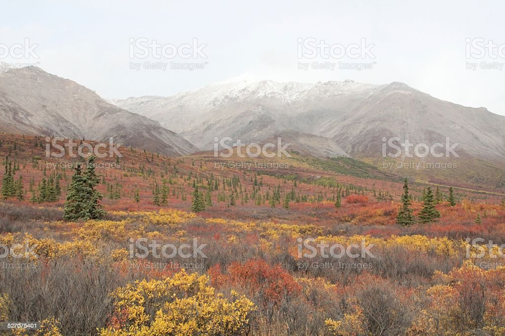 Bright Fall color in Denali National Park Alaska stock photo