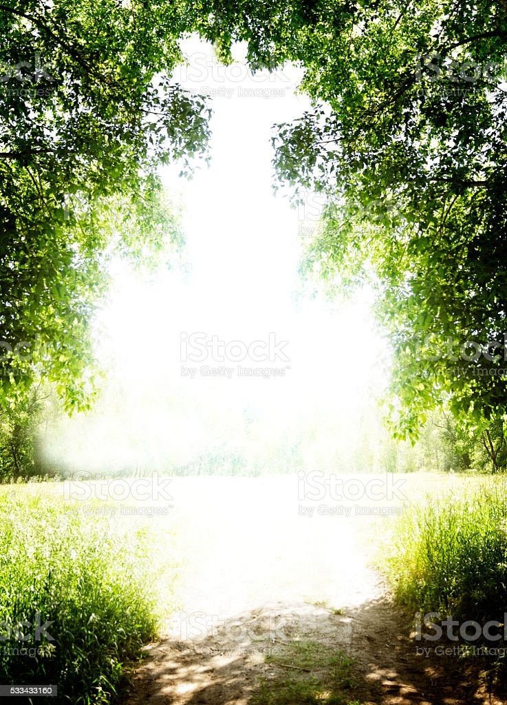 Bright field with tree limbs over hanging dirt road. stock photo