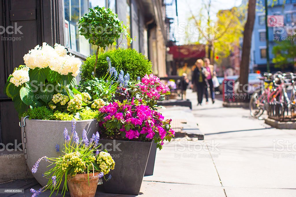 Bright flowers in a pot at New York streets stock photo