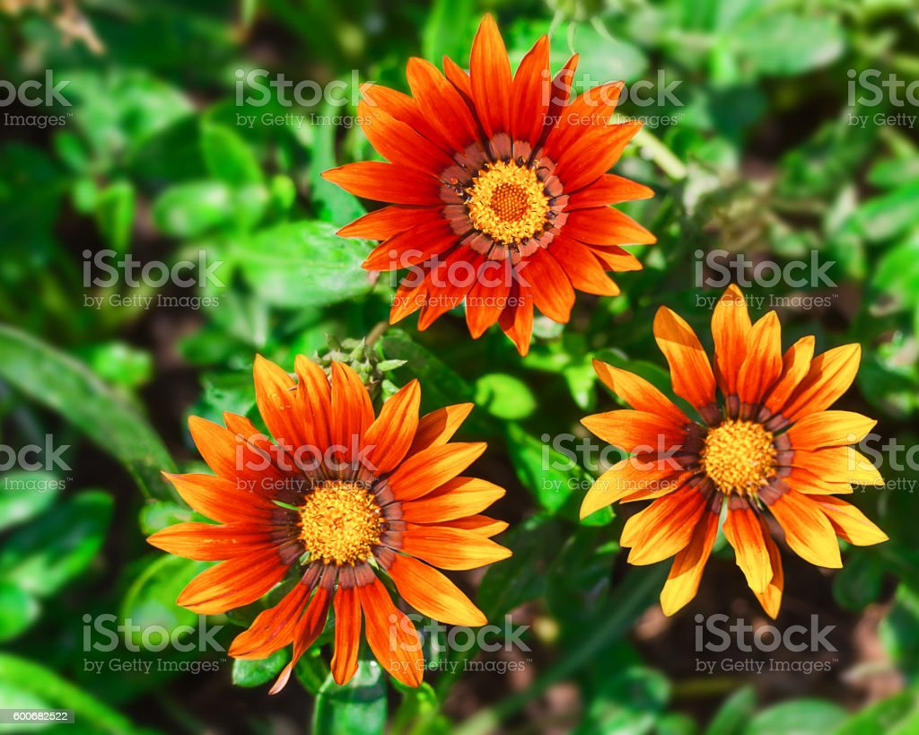 Bright flowers on the flowerbed in city park. stock photo