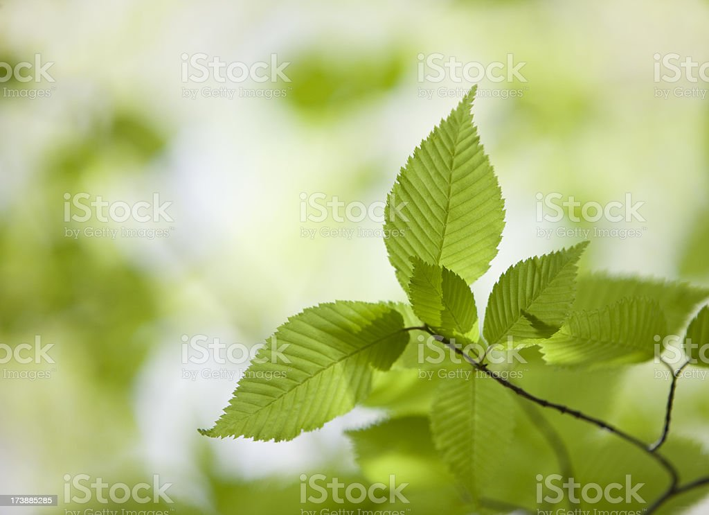 Bright Fresh Leaves royalty-free stock photo