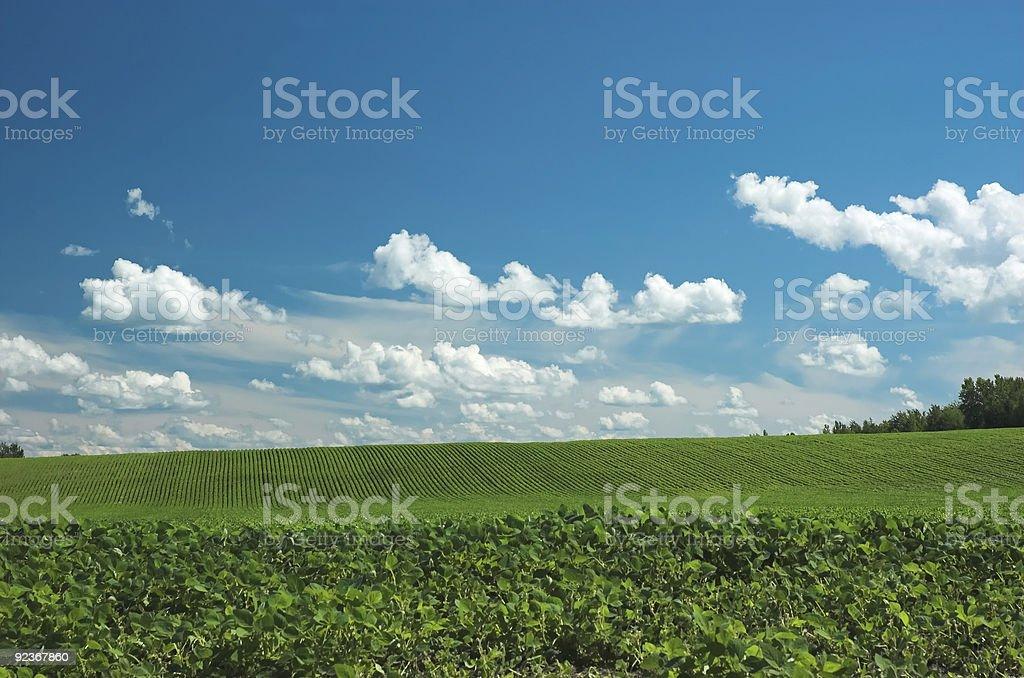 Bright green farm field and blue sky stock photo