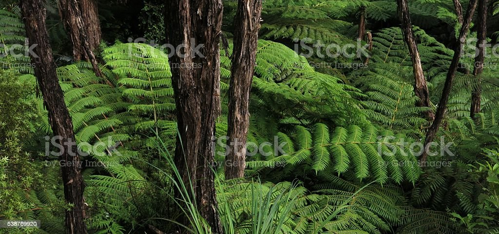 Bright green fern in New Zealand stock photo