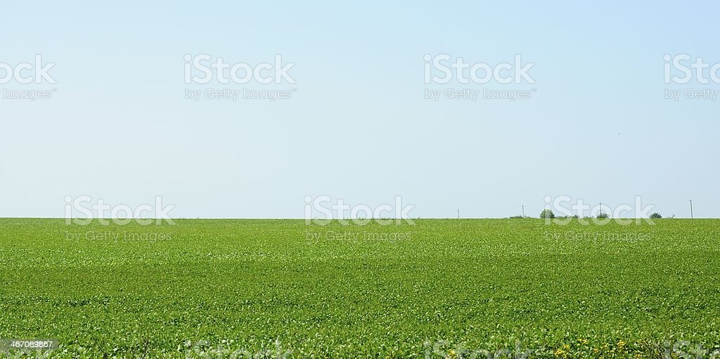 bright green field under a blue sky royalty-free stock photo