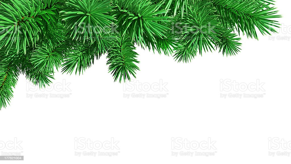 Bright Green Fir Tree on a White Background royalty-free stock photo