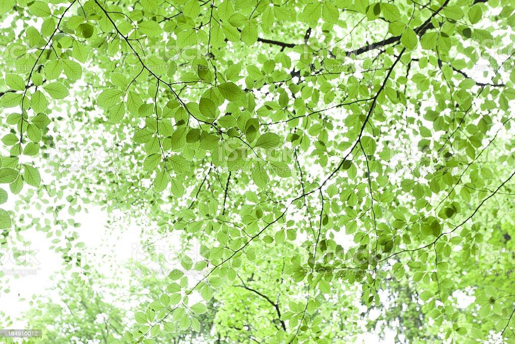 Bright green foliage background stock photo