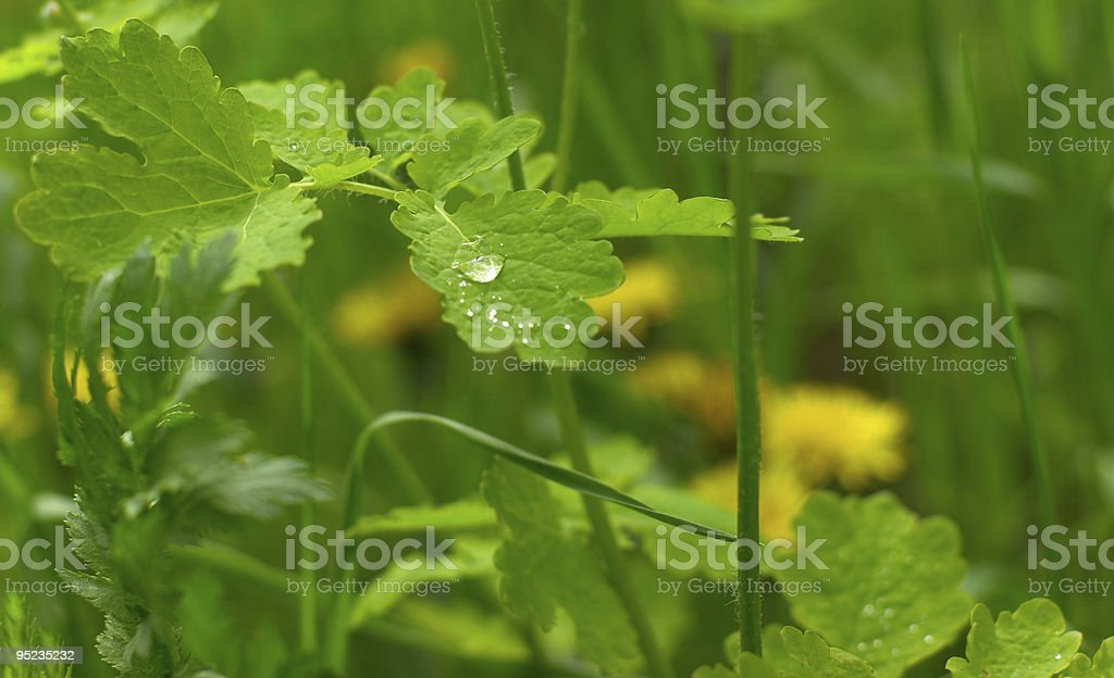 Bright green grass after a rain royalty-free stock photo