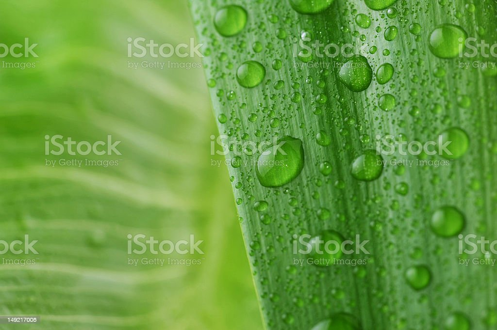 bright green leaf royalty-free stock photo