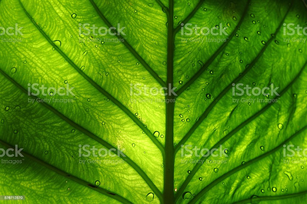 Bright green leaf stock photo