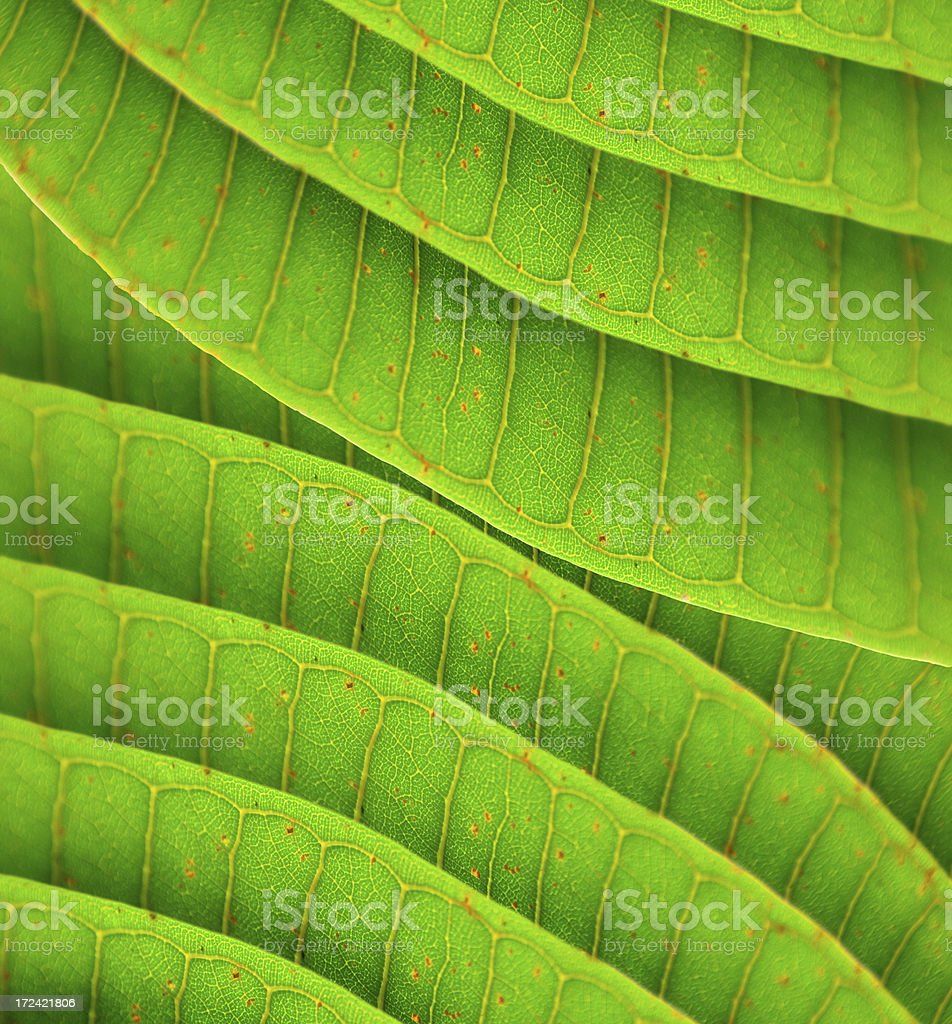 Bright green leaves texture royalty-free stock photo
