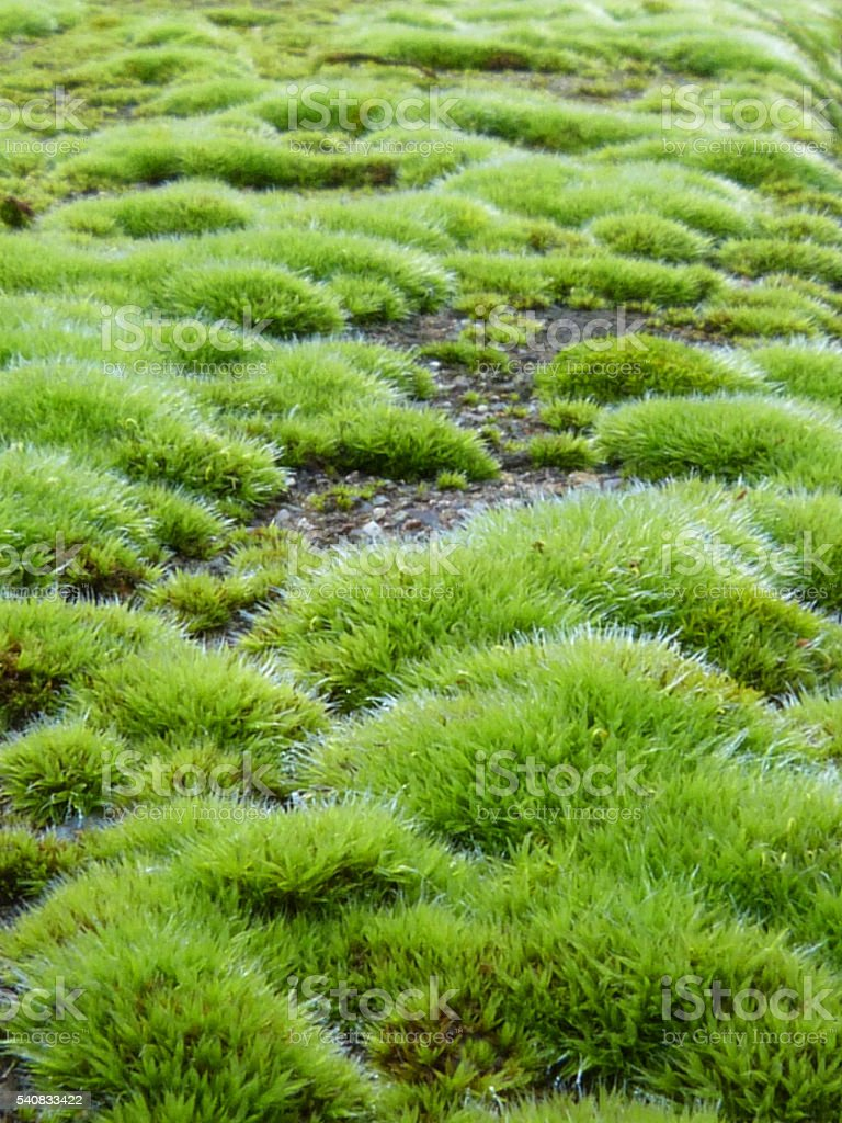 Bright Green Moss Covered Wall Macro Abstract Background stock photo