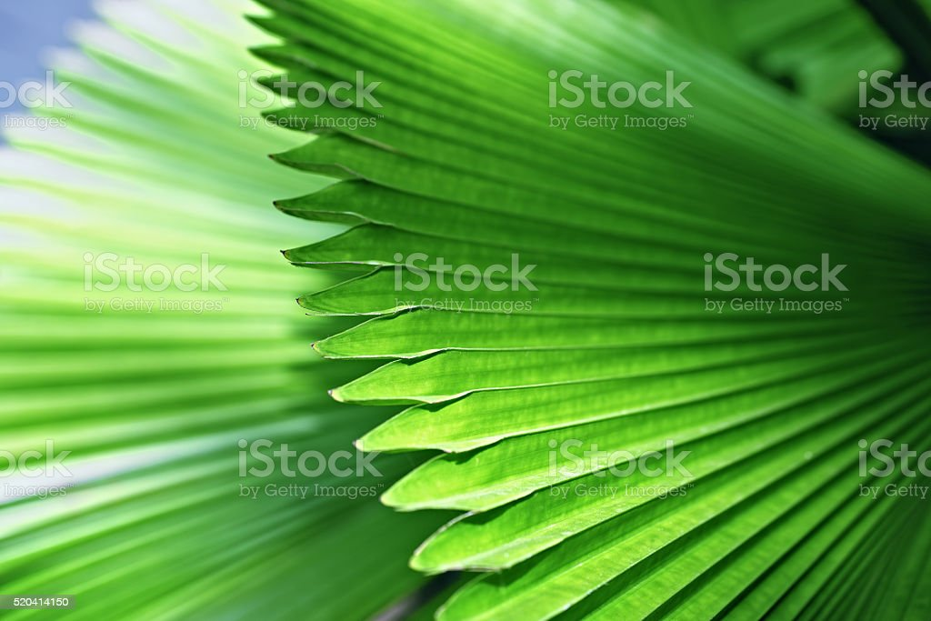 Bright green palm leaves stock photo