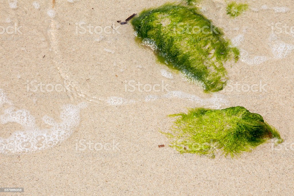 Bright green seaweed on rocks in the surf stock photo