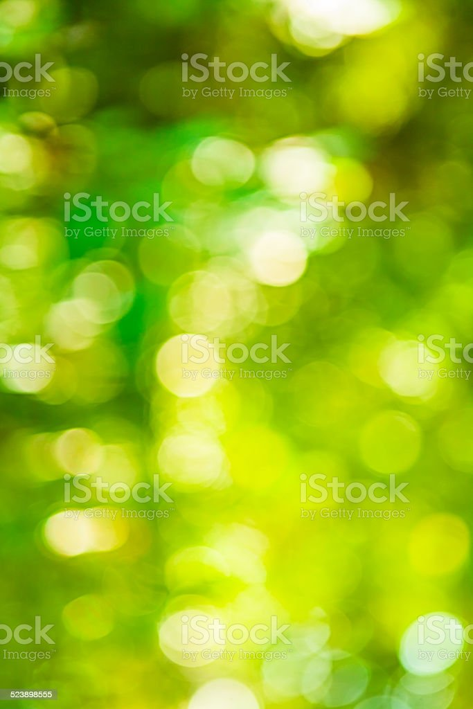 bright green summerly bokeh stock photo