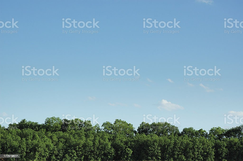 Bright Green Tree Tops and Fresh Air royalty-free stock photo