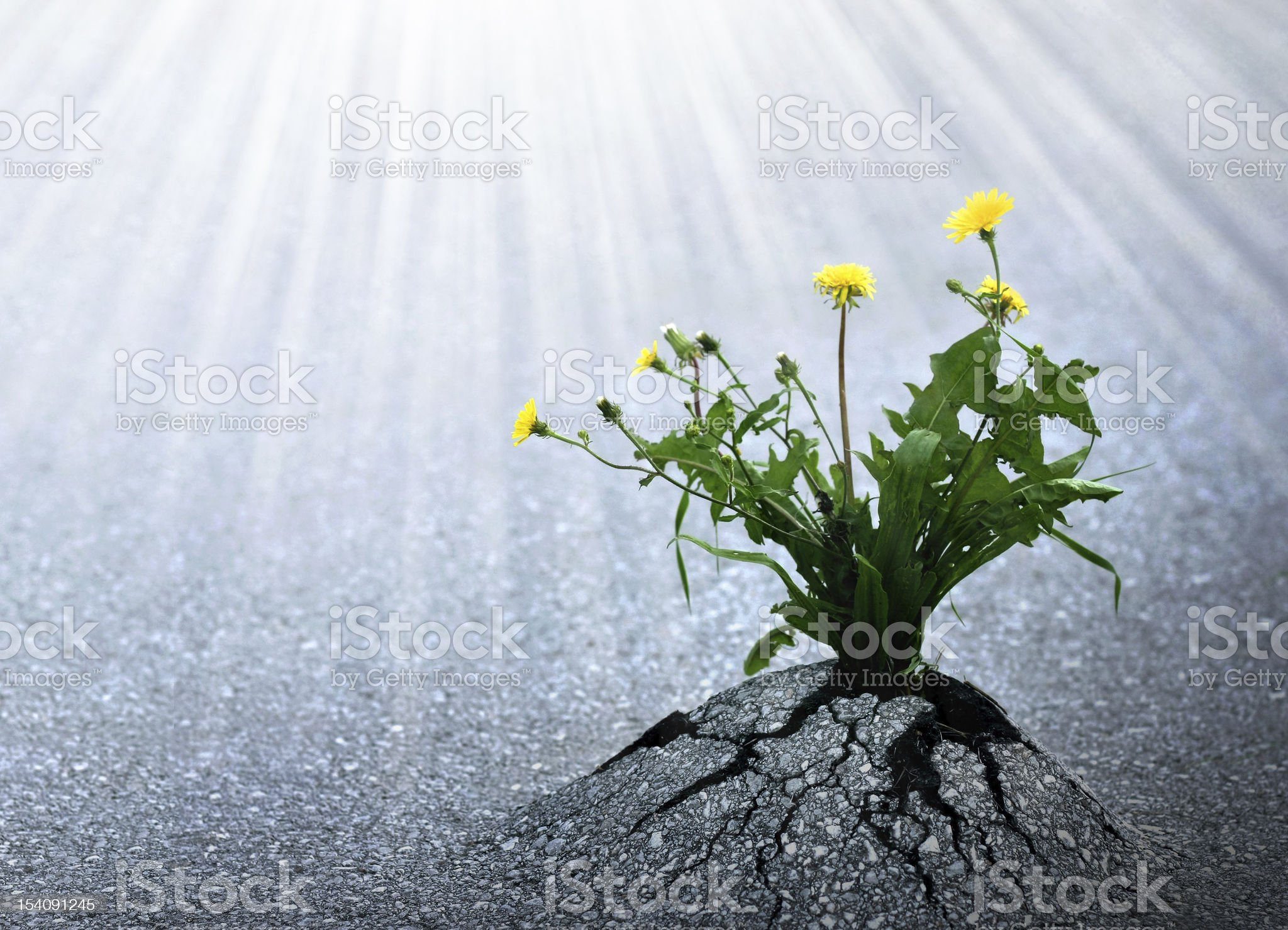 Bright Hope of Life royalty-free stock photo