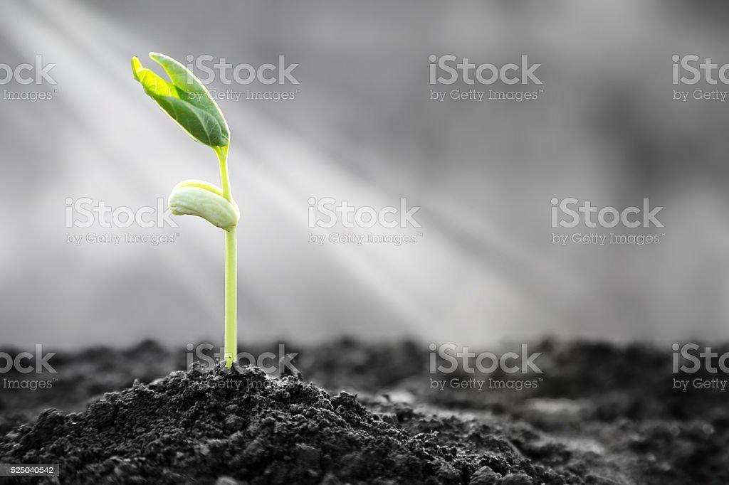 Bright Hope of Life stock photo
