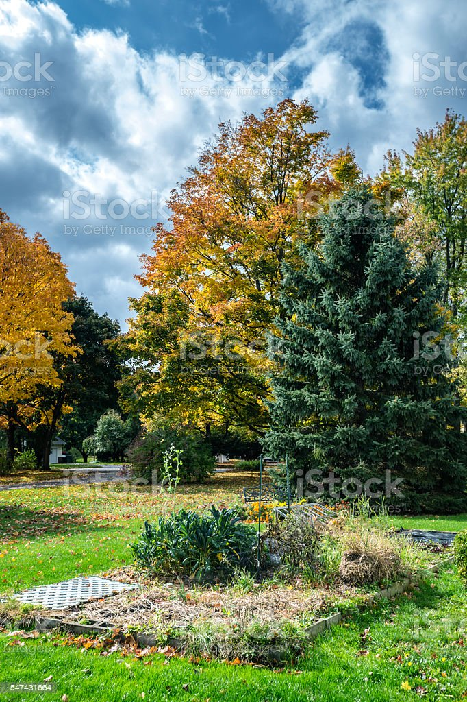 Bright Late Autumn Afternoon Suburban Overgrown Wilting Vegetable Garden stock photo