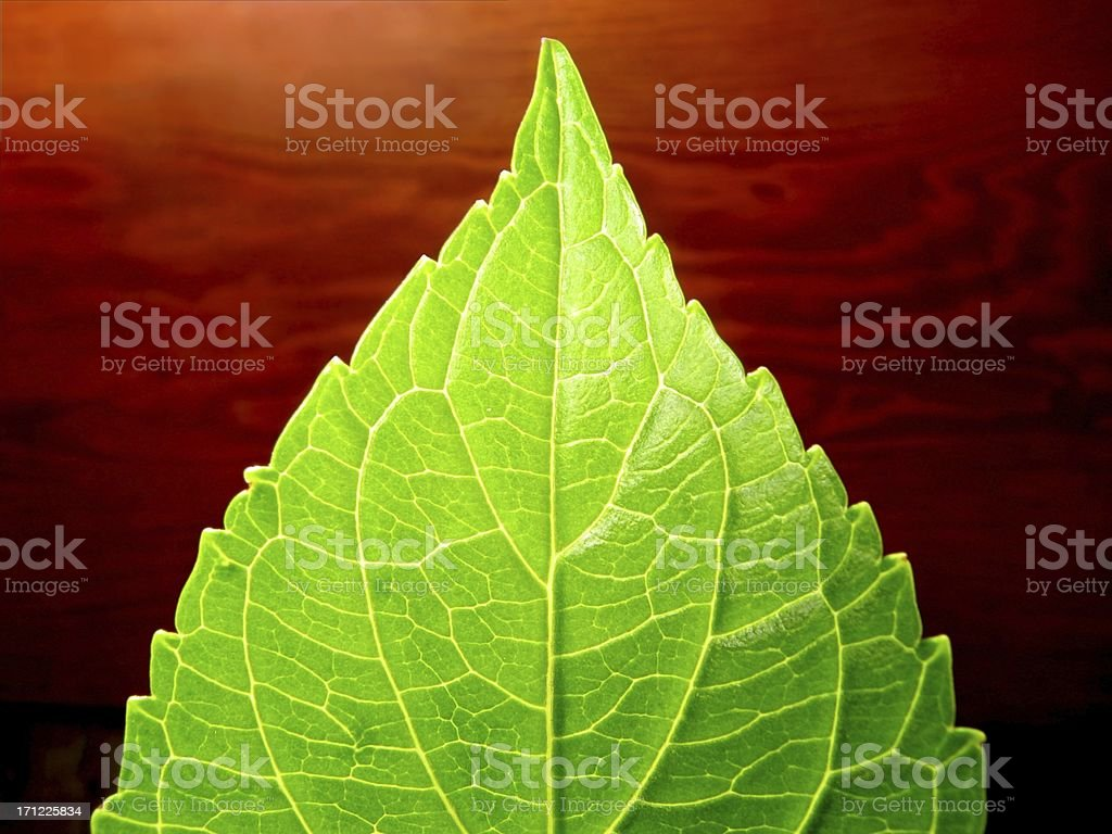 Bright Leaf stock photo