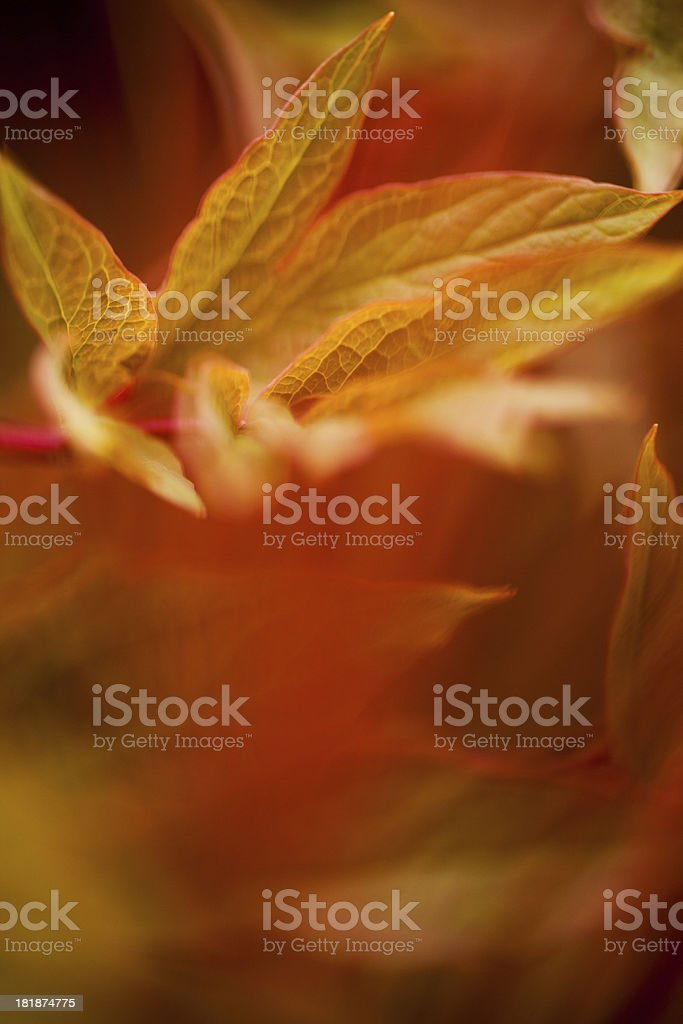 Bright leaves royalty-free stock photo