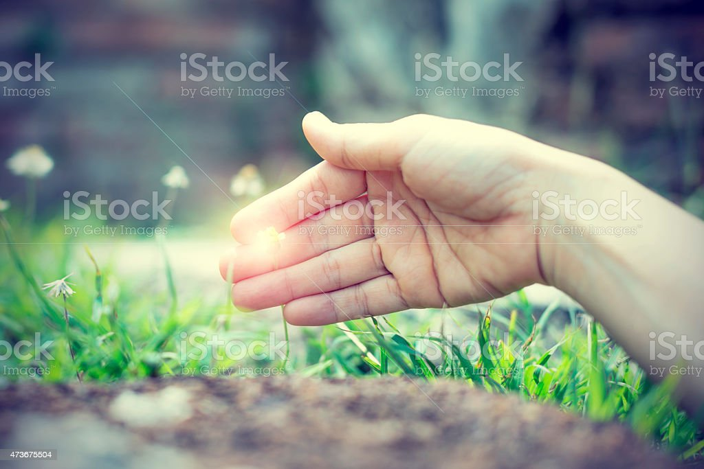 Bright light in hand when touching a small flower royalty-free stock photo
