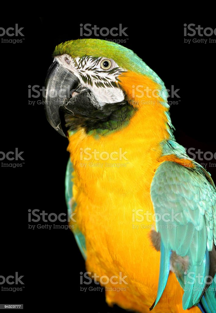 Bright macaw parrot royalty-free stock photo