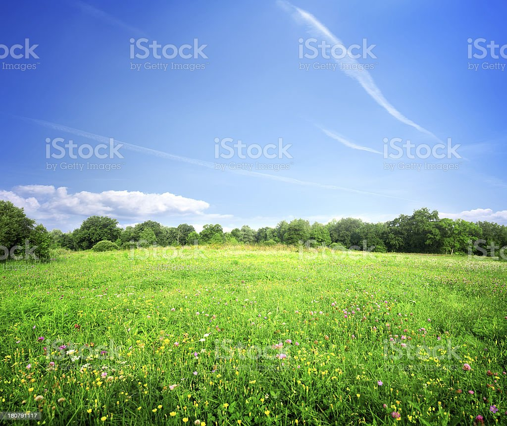 Bright meadow flowers royalty-free stock photo