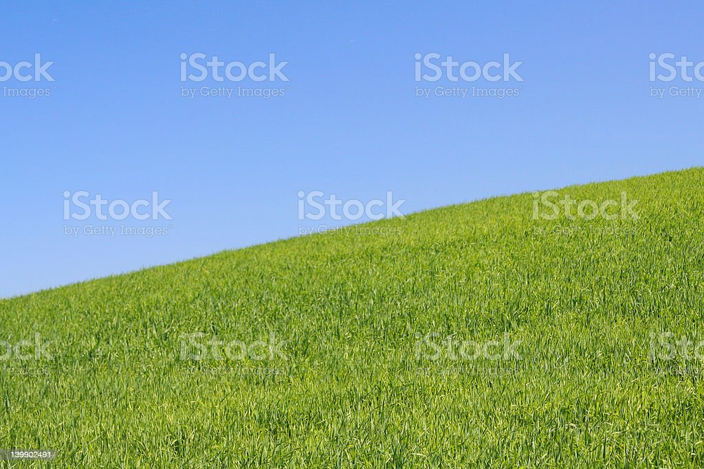 bright meadow #2 royalty-free stock photo