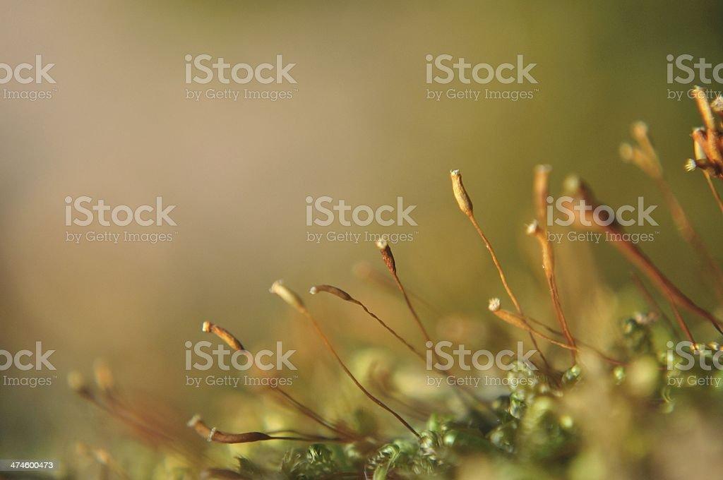 Jasny moss makro strzał w spring zbiór zdjęć royalty-free
