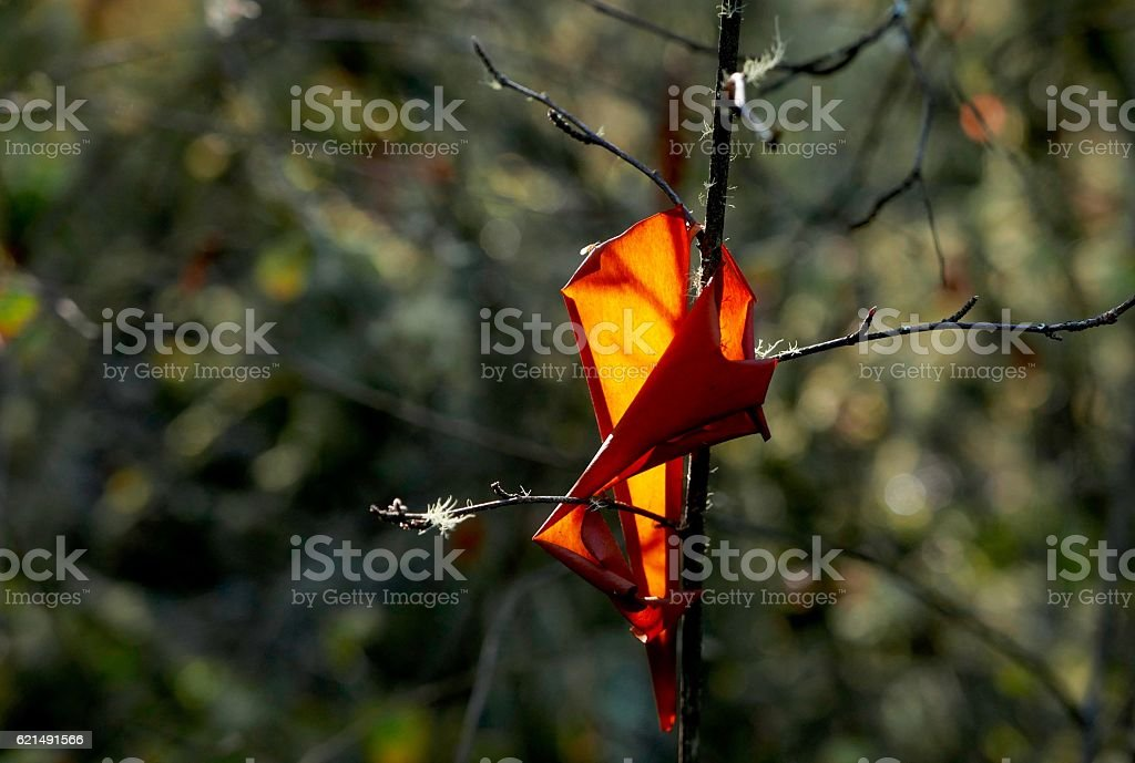 Bright orange arbutus bark caught on twig stock photo