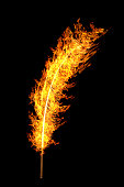 bright orange flame feather isolated on black