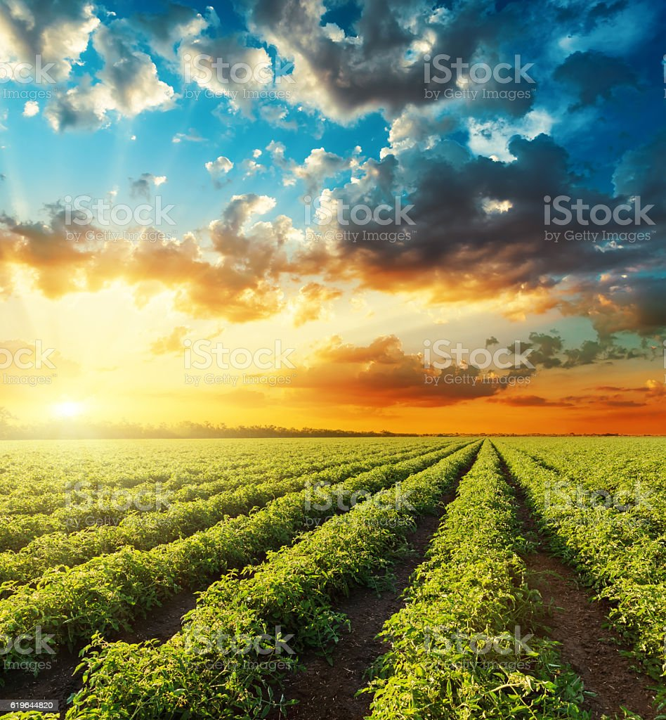 bright orange sunset in dramatic sky over green field stock photo
