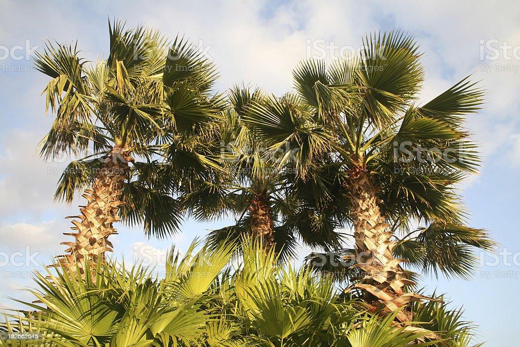 Bright Palm Trees stock photo
