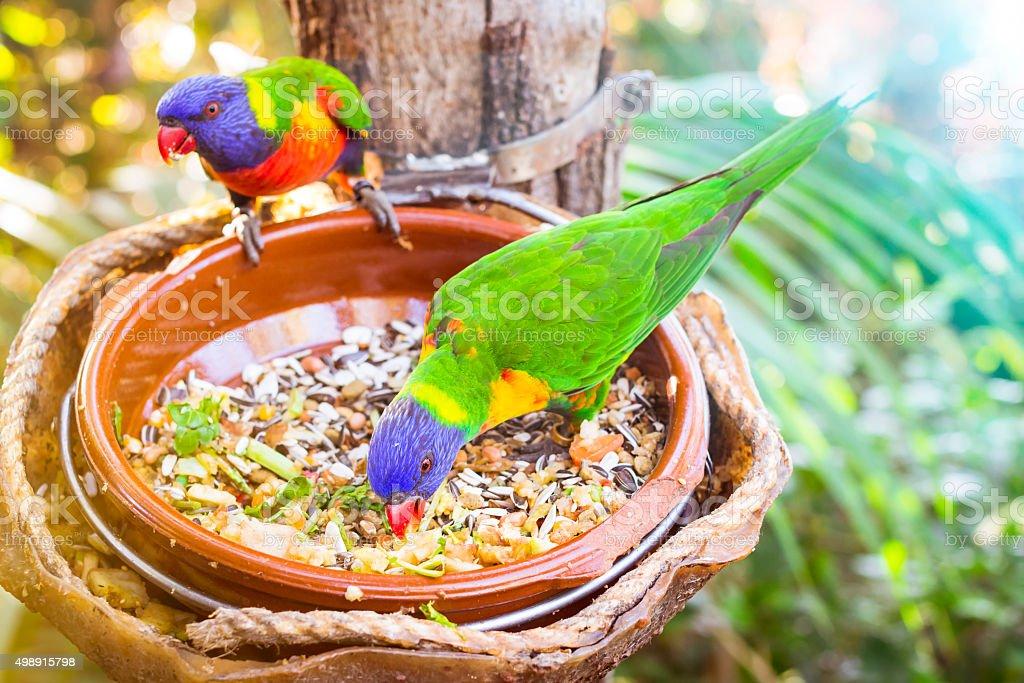 Bright parrot in Loro Park stock photo