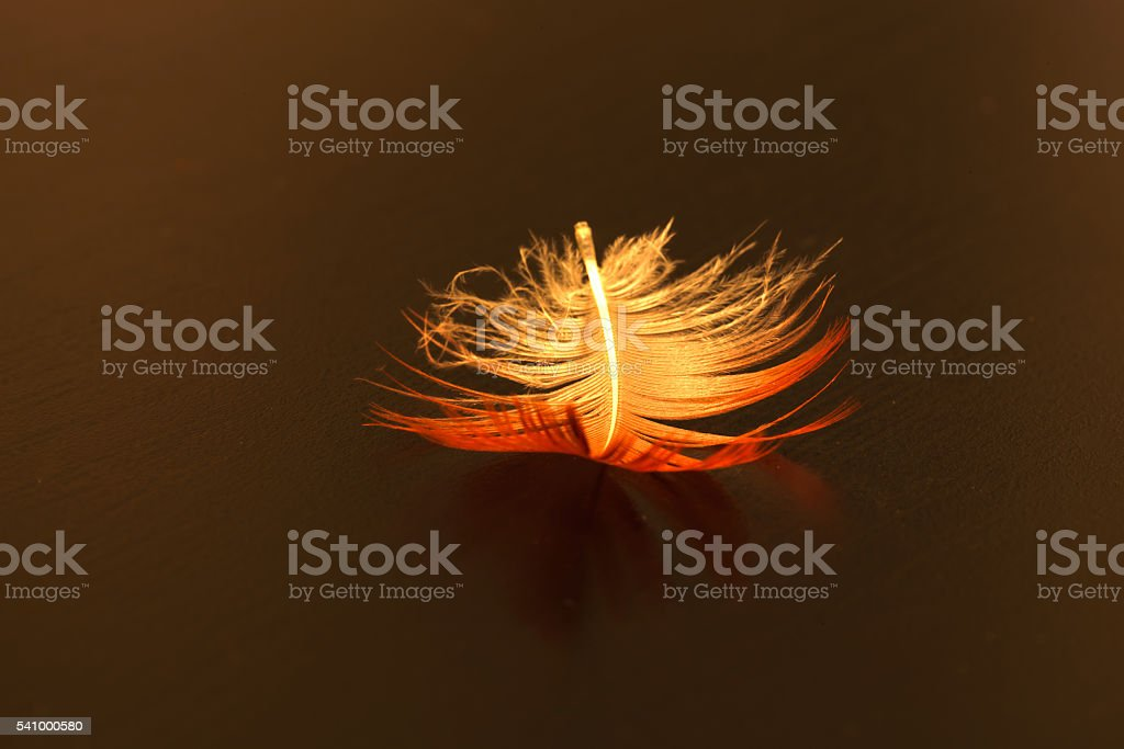 Bright pink and white feather of a scarlet ibis stock photo