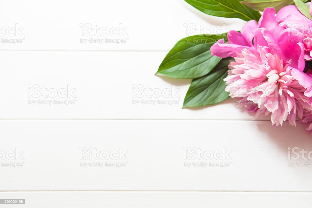 Bright pink peonies on white wooden background stock photo