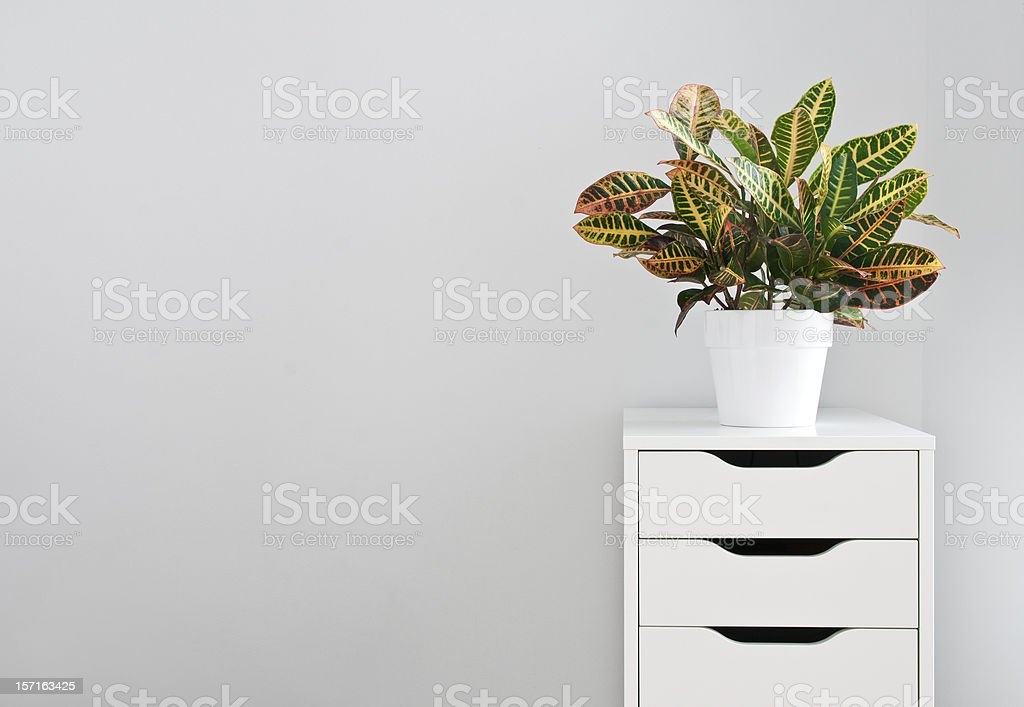 Bright plant and white drawer chest stock photo