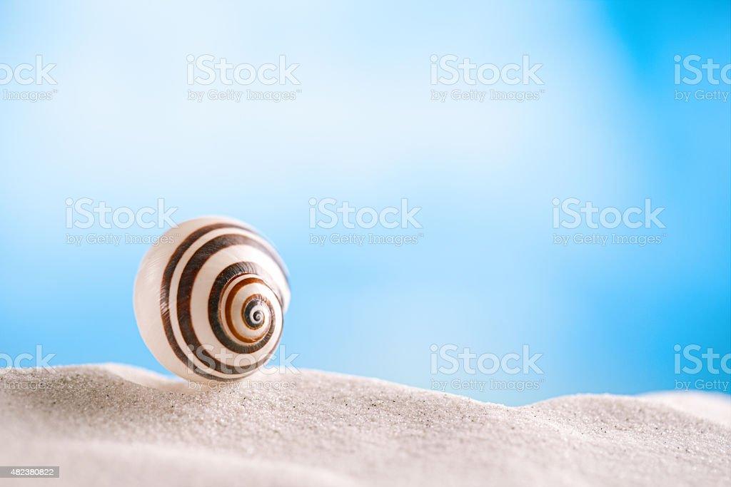 bright polymita shells on white beach sand under sunlight stock photo