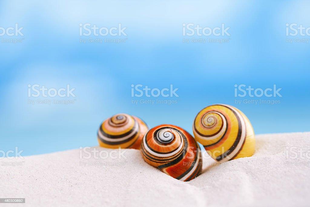bright polymita shells on white beach sand under the sunlight stock photo