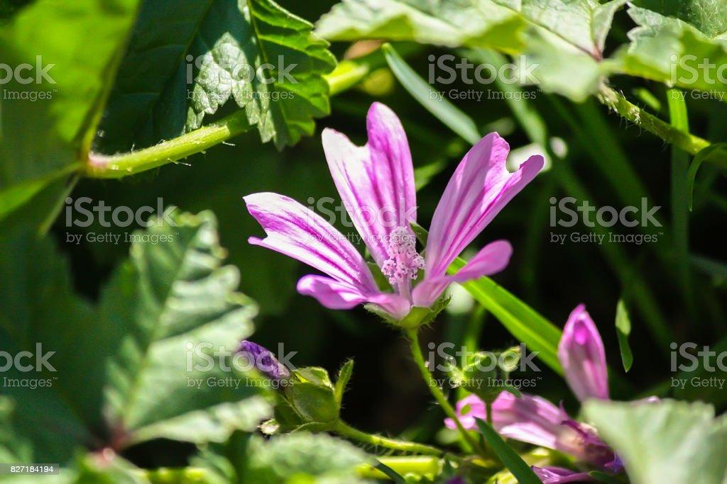 Bright Purple summer flowers close up. stock photo