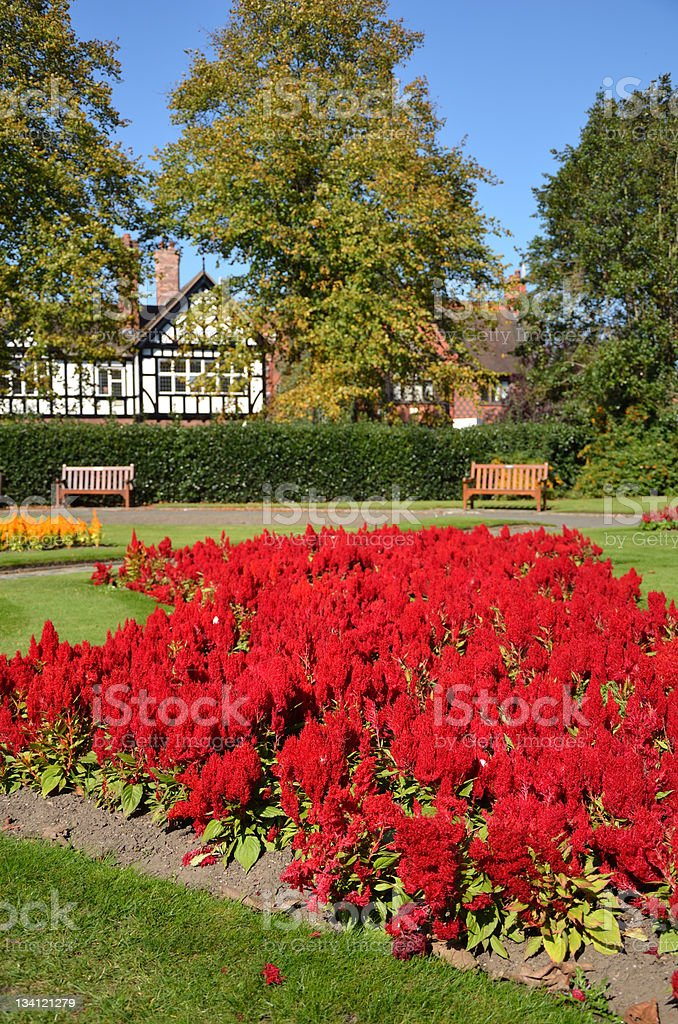 Bright Red Flowers in Chester's Grosvenor Park royalty-free stock photo
